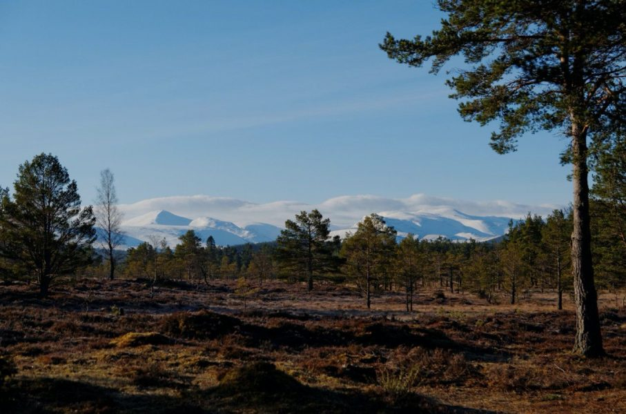 The Woodmans Eco Cabin, Off grid Wooden lodge, Cairngorms